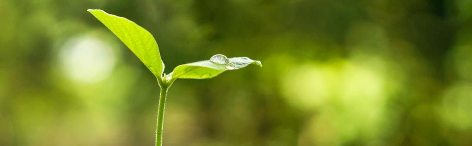 Green-checking the Treasury's sustainable development commitments